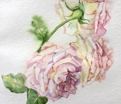 english-rose_small.jpg